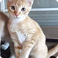 Adopt A Pet :: Frodo - Escondido, CA