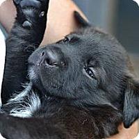 Adopt A Pet :: Bandit - Cumming, GA