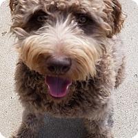 Adopt A Pet :: Samson ADOPTED! - moscow mills, MO