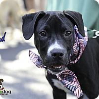 Adopt A Pet :: Fred - Alpharetta, GA