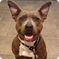 Adopt A Pet :: Jasmine - Lancaster, PA