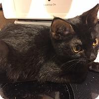 Adopt A Pet :: Lucinda - Delmont, PA