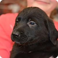 Adopt A Pet :: Maui - Ogden, UT