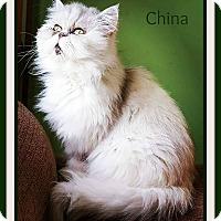Adopt A Pet :: CHINA - Lincoln, NE