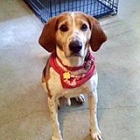 Adopt A Pet :: Elvis - Allen town, PA