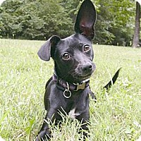 Adopt A Pet :: Lizzie - Mocksville, NC