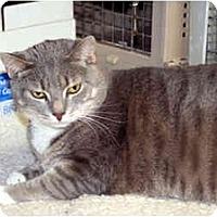 Adopt A Pet :: Sahara - Racine, WI