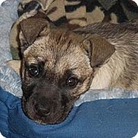 Adopt A Pet :: ANNIE - Torrance, CA