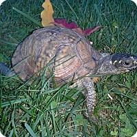 Adopt A Pet :: Gulf Coast Box - Baltimore, MD