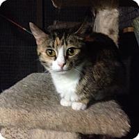 Adopt A Pet :: Faith - Monroe, GA