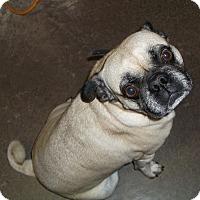 Adopt A Pet :: Rocky - Geneseo, IL