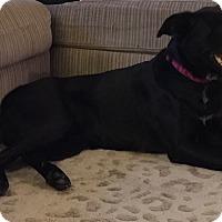 Adopt A Pet :: GRACE - EDEN PRAIRIE, MN