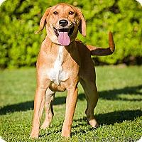 Adopt A Pet :: Fiona -DRD Graduate - Owensboro, KY