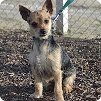 Adopt A Pet :: Raksha - Palo Alto, CA