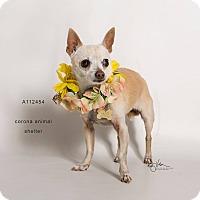 Adopt A Pet :: HONEY - Corona, CA