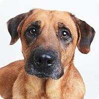 Adopt A Pet :: Terrance - Wilmington, DE