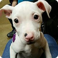 Adopt A Pet :: Lizzie - Alhambra, CA