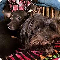 Adopt A Pet :: Pixie & Cherry - ST LOUIS, MO