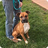 Adopt A Pet :: Bambi - Baltimore, MD