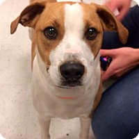 Adopt A Pet :: Theodore  in CT - Manchester, CT