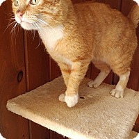 Adopt A Pet :: Patrick - Middletown, NY