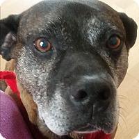 Adopt A Pet :: Buster - Aurora, IL