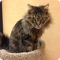 Adopt A Pet :: Scrappy - Salem, NH