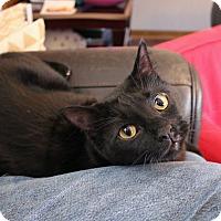Adopt A Pet :: Weston - Athens, GA