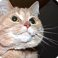 Adopt A Pet :: Katy - Xenia, OH