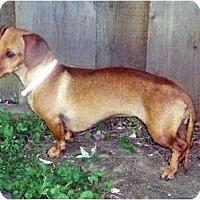Adopt A Pet :: Carley-Adoption Pending - San Jose, CA
