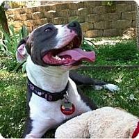 Adopt A Pet :: Bella - Concord, CA