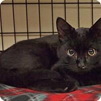Adopt A Pet :: Dell - Ocean City, NJ