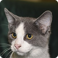 Adopt A Pet :: Pawlie - Medina, OH