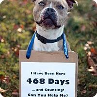 Adopt A Pet :: Ike - Sparta, TN
