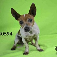 Adopt A Pet :: VINSON - STOCKTON, CA