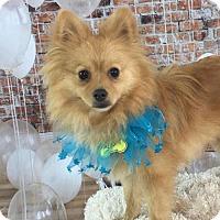 Adopt A Pet :: Reilly - Dallas, TX