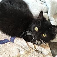 Adopt A Pet :: Fiona - Berkley, MI