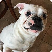 Adopt A Pet :: Barkley - Courtland, AL
