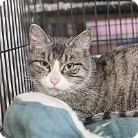 Adopt A Pet :: Meela - Carlisle, PA