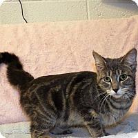 Adopt A Pet :: Mandy - Shelby, MI