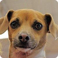 Adopt A Pet :: Dash - Longview, WA