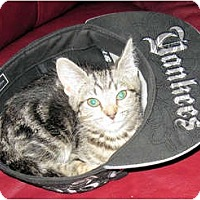 Adopt A Pet :: KiKi - Catasauqua, PA