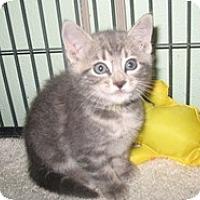 Adopt A Pet :: Freedom - Shelton, WA