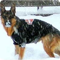 Adopt A Pet :: Kaiser - Hamilton, MT