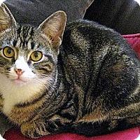 Adopt A Pet :: Diamond - Alexandria, VA