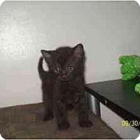 Adopt A Pet :: Jett - Milwaukee, WI