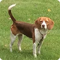 Adopt A Pet :: Lil Girl - Hamilton, ON