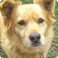 Adopt A Pet :: Cricket - Crescent City, CA