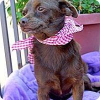 Adopt A Pet :: Canelita - San Diego, CA