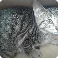 Adopt A Pet :: Rhonda - Fayetteville, WV